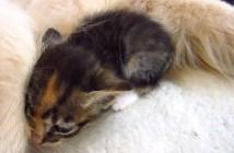 モフモフに突撃する猫