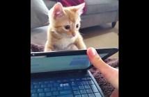 ノートパソコンを開かせない子猫