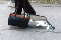 初めての散歩にドキドキする猫
