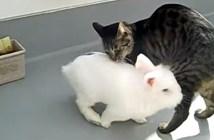 ウサギにタジタジの猫