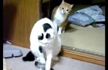 後ろをとられる猫