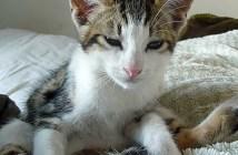 yawaraka_cat