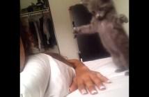 手にアタックする子猫