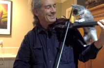 バイオリンをいっしょに演奏してくれる子猫