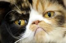 冒険心がアダとなった猫のハプニング