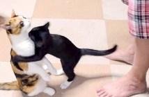抱っこしたいのに抱っこされる猫