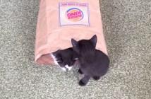 子猫が出てくる紙袋