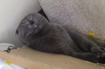 仏様のような顔で眠る猫