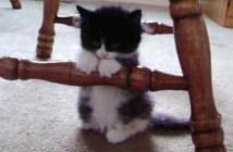 椅子の足に寄りかかって眠る子猫