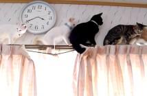渋滞発生中の猫