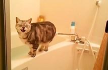 覗き見された猫