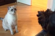 見知らぬ犬に困惑する猫