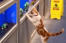 毎朝ペットショップに通う猫
