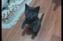 自分も撮って欲しい子猫