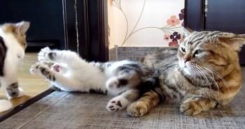 母猫とワンパクな子猫