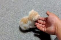 ボロボロの子猫が元気になる