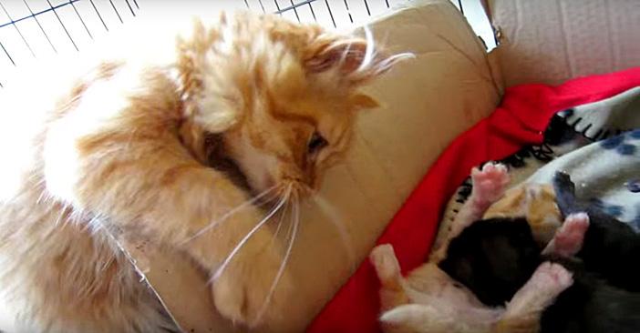 子猫を見る兄猫
