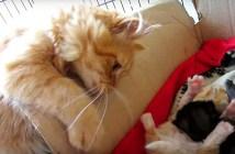 子猫と兄猫