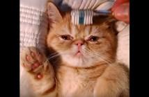 歯ブラシで気持ちよくなる子猫