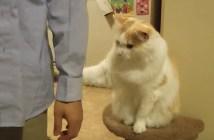 飼い主さんを引き止める猫