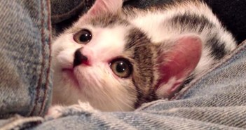 保護した子猫の1ヶ月の記録