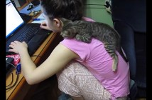 女の子の肩の乗る子猫