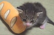 子猫の一年間の記録