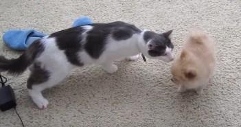 初めて子犬に会った猫