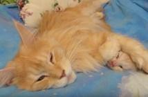 子猫の耳をふさぐ母猫