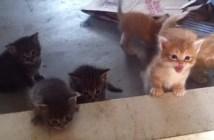 段差をよじ登る子猫たち