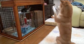 子猫にお願いする犬