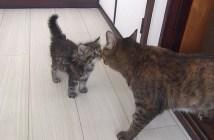 子猫と先住猫の初対面