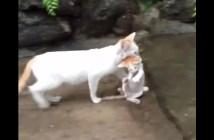 雷雨の中子猫をつれて帰る母猫