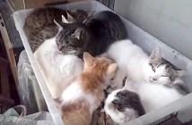 箱にみっちりと詰まる猫