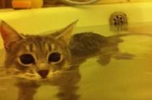飼い主さんといっしょにお風呂に入る猫