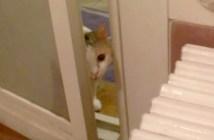 夜な夜なお風呂を覗きにくる猫