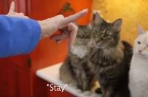 手話で猫とコミュニケーション