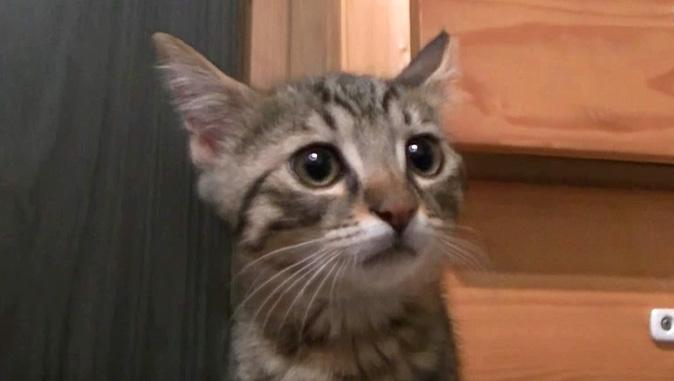 雷を怖がる子猫