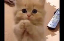 おねだりする子猫