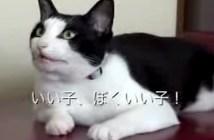 叱られちゃった猫