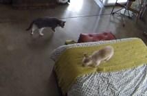 犬を静かにさせる猫