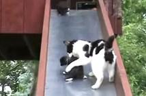 滑り台を滑り落ちる子猫を助ける母猫