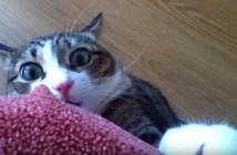 ビックリ顔で固まる猫