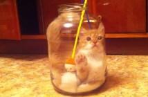 瓶詰め子猫