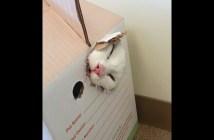 ダンボールから出られなくなった猫