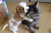 子犬に好かれ過ぎた猫