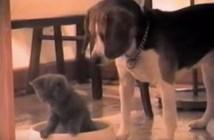 子猫を容器から出そうとする犬