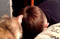 泣き出した男の子を励ます猫