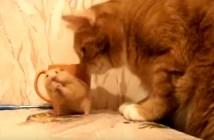 猫が近づいてきて急いでご飯を食べるハムスター