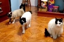 カクカクした動きで近づいてくる猫